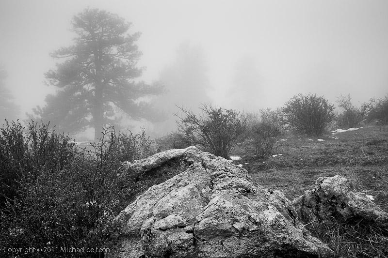 Genesee Park Fog